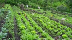 garden-view-july-30-2011