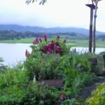 herb-garden-july-30-2011