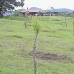 reforestation-potrero-ernesto